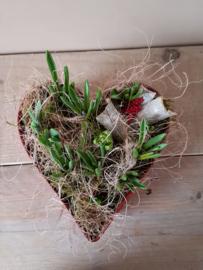 Hartplanter met bolletjes