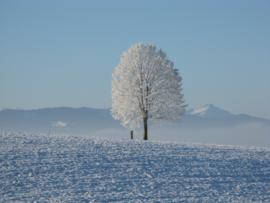 Online Cursus '12 RuigeNachten van Kerstmis'