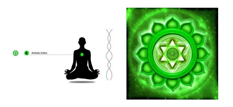 Opleiding `Hartchakra Coherentie`