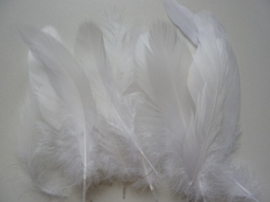 12238/3809- ca. 15 stuks ganzenveren van11 tot 19cm. lang wit
