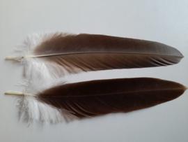 AM.301 - 1 x adelaar veer van 30 - 35 cm. lang