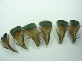 AM.410- ca. 50 stuks pauwenveertjes groen/grijs 4-8cm lang