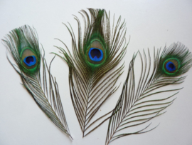 6626 025- 3 stuks pauwenoog veren van ca. 20 cm lang -  AANBIEDING