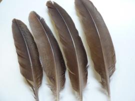 AM.157- 4 stuks wilde kalkoen veren van 22 tot 26 cm lang