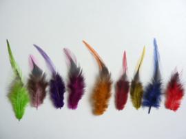 AM.144- 100 stuks saddles hanen verenmix 10-15cm