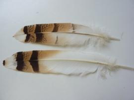 AM.222 - 2 stuks exclusieve uilenveren van ca. 25 cm.
