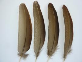 AM.104- 4 stuks goudfazant veren van 14-16cm AA-kwaliteit