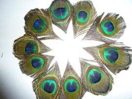 AM.100- 10 stuks ogen van pauwenveren van ca. 4.5 x 7 cm.