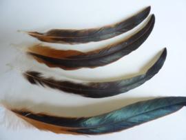 AM.65 - 4 stuks hanenveren van 30 - 35 cm. bruin/zwart