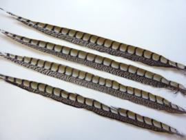 exclusieve lady amhurst fazantveer van 58-64cm lang -- AANBIEDING! --