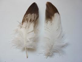 AM.409 - 2 stuks adelaars veren 15 - 20 cm. lang
