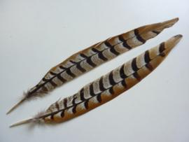 AM.417- 2 stuks  fazantveren (reeves - koningsfazant) van ca. 28-35cm lang