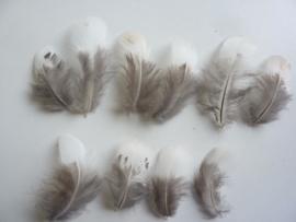 AM.193 - 10 stuks mini eenden veertjes wit met grijs dons 6 - 8 cm.