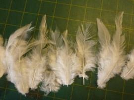 12235/3509- ca. 15 stuks hanenveertjes van 7 tot 13cm lang wit