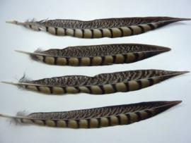 AM.158- 4 stuks fazant lady amherst veren van 25-30cm lang
