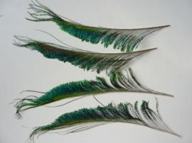 AM.70 - 3 stuks pauwenoog zwaarden veren van ca.25 - 30 cm lang en tot  5 cm breed AANBIEDING