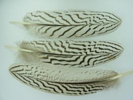 AM.160- 3 stuks zilverfazant vleugelveren van 20-25cm