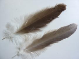 AM.148- 2 stuks adelaarsveren van 25-30cm lang