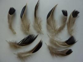AM.405- 10 stuks exclusieve eendenveren van 6-9cm