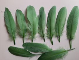 AM.317 - 10 stuks ganzenveren van 15 - 20 cm. lang groen