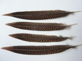 AM.66- 4 stuks goudfazant veren van 18-24cm AA-kwaliteit