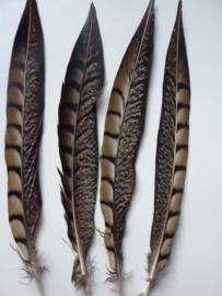 AM.84- 4 stuks fazant lady amherst veren van 20-25cm