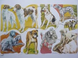 """p0015007- nostalgisch poezie plaatje """"honden"""" 24x15cm"""
