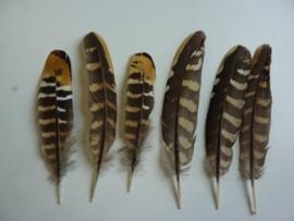AM.220- 6 stuks reeves fazantveren van 13-18cm lang gele accenten