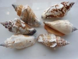 2619- 6 stuks natuurschelpen kralenhangers van 30-40mm beige gevlekt