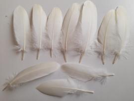 AM.115 - 10 stuks ganzenveren van 15 - 20 cm. ivoor/creme