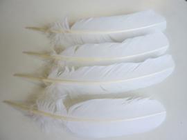 AM.136- 4 stuks grote kalkoen veren van 28-35cm lang wit