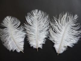 AM.112- 3 stuks struisvogelveer moulin rouge veer van 16-21cm lang wit
