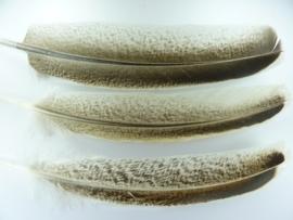 AM.68- 3 stuks wilde kalkoen veren met wit/bruine spikkels van 22-29cm lang