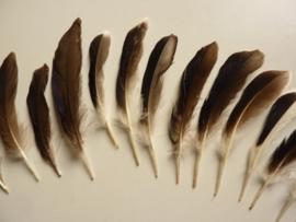 AM.138- 12 stuks eendenveren van 10-15cm lang