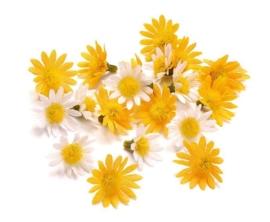 7611 220- 20 stuks decoratie bloemetjes margrietjes van 30mm geel/wit