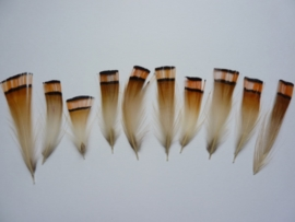AM.307-50 stuks fazant veertjes van 3.5 - 6 cm lang