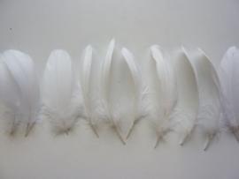 AM.312- 10 stuks ganzenveren van 15-20cm lang wit