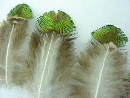 AM.314- 10 stuks pauwenveertjes van 4-9cm lang