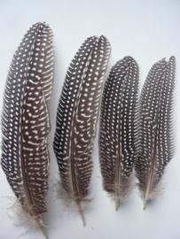 AM.85- 4 stuks parelhoen quinea veren van 20-25cm