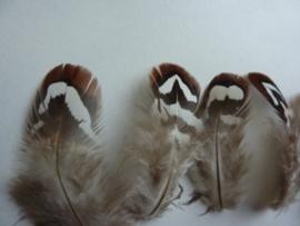AM.219- 10 stuks reevers fazantveertjes van 5-8cm lang bruin/wit