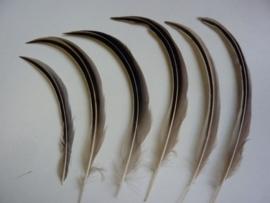 AM.218- 6 stuks eendenveren / drakenveren van 14-19cm - zeer zeldzaam!