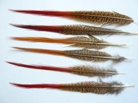 AM.120 - 6 stuks red-tips veren van ca.22 - 23 cm. lang