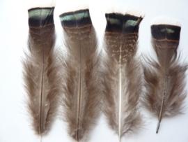 AM.205- 4 stuks wilde kalkoen veren van 10-18cm