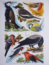 """p0015008- nostalgisch poezie plaatje """"vogels"""" 24x15cm"""