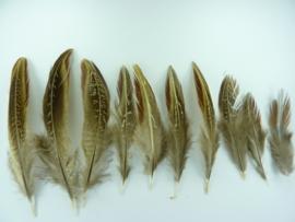 AM.30- 10 stuks fazant veertjes van 7-11cm AANBIEDING
