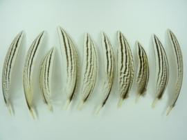 AM.196- 10 stuks zilverfazant veertjes van 9-12cm