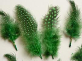 AM.118.B - 20 stuks AA-kwaliteit parelhoen veertjes groen van 9-13cm lang
