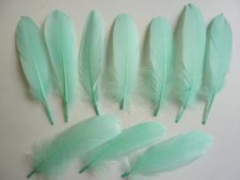 AM.216- 10 stuks ganzenveren van 15-19 cm. lang mintgroen