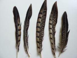AM.306 - 5 stuks lady amhurst fazanten veren van 14 - 17 cm.