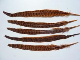 AM.124- 5 stuks ringneck fazantveren van 23-26cm lang oranjebruin